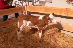 k-Milch_2013_5